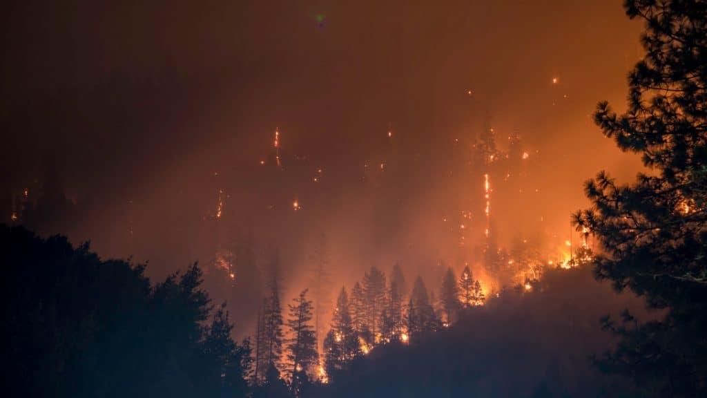 victorian bush fires