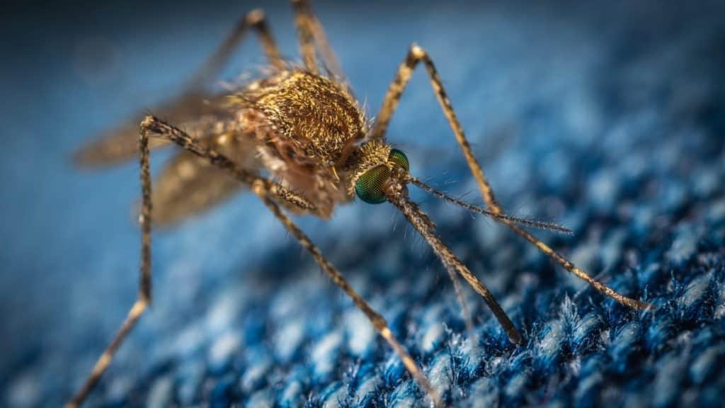 surviving dengue fever